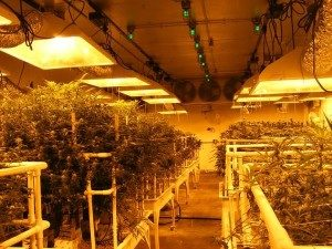 Grow 300x225